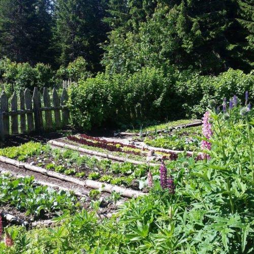 Impressionen von der Oberhauserhütte in Lüsen und Umgebung (4)